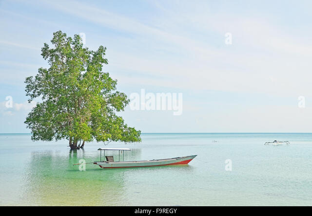 A tree and a boat on the beach in Biduk-Biduk village - Stock Image
