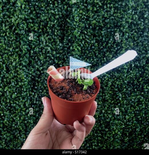 Chocolate ice-cream with raisins in tiny pot. - Stock-Bilder
