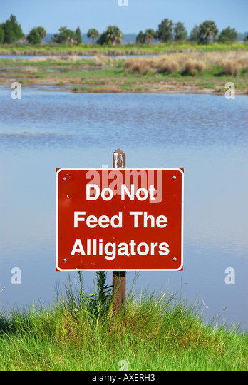 Florida  sign do not feed the alligators - Stock Image