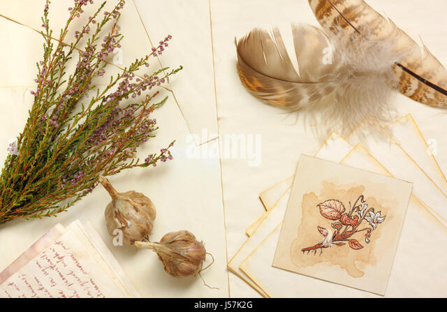 Nostalgic vintage still life with garlic, botanical drawing, bunch of dried heather and feathers over aged paper - Stock Image