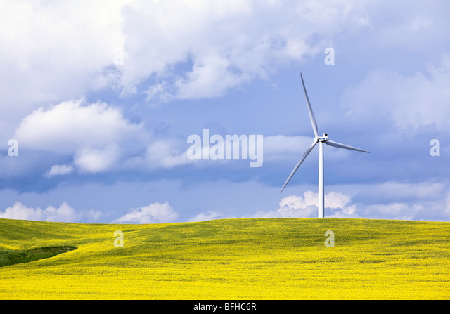 Wind Energy Turbine and Canola Field, on a stormy day.  St. Leon, Manitoba, Canada. - Stock Image