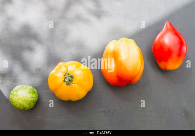 Colorful varieties of tomato - Stock Image