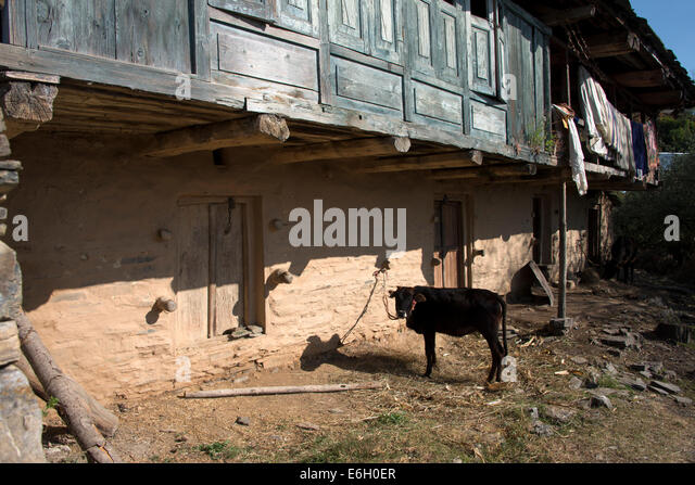 Ancient India Cow Stock Photos Amp Ancient India Cow Stock