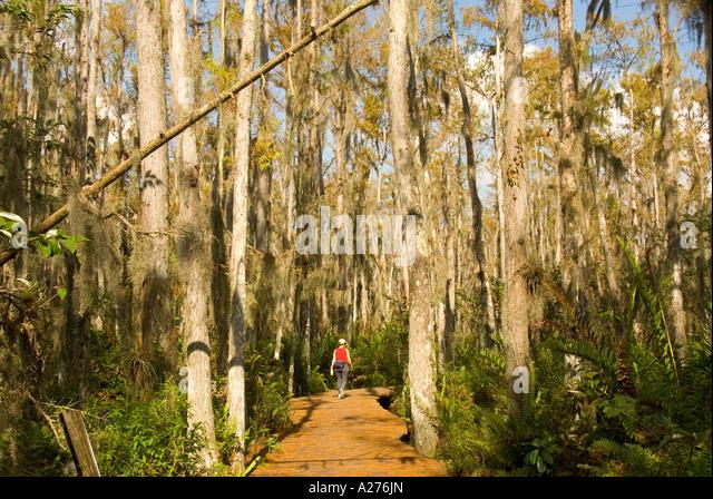Florida  Loxahatchee National Wildlife Refuge cypress swamp boardwalk - Stock Image
