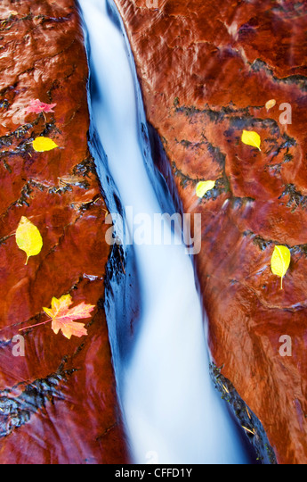 Water cuts through a crack in the sandstone surrounded by fall leaves in Zion National Park, UT. - Stock Image