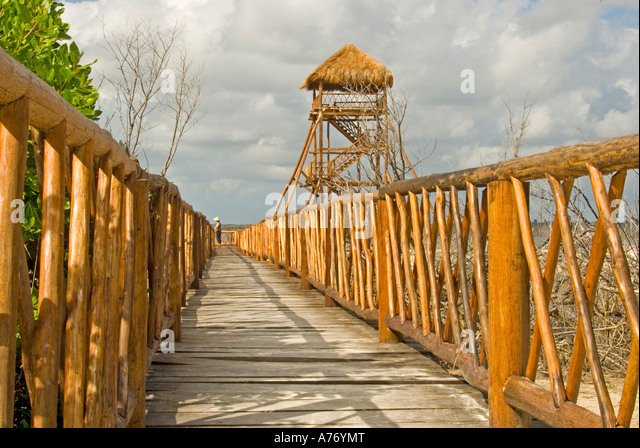 Cozumel Mexico Punta Sur Park Ecological Reserve boardwalk to see crocodiles - Stock Image