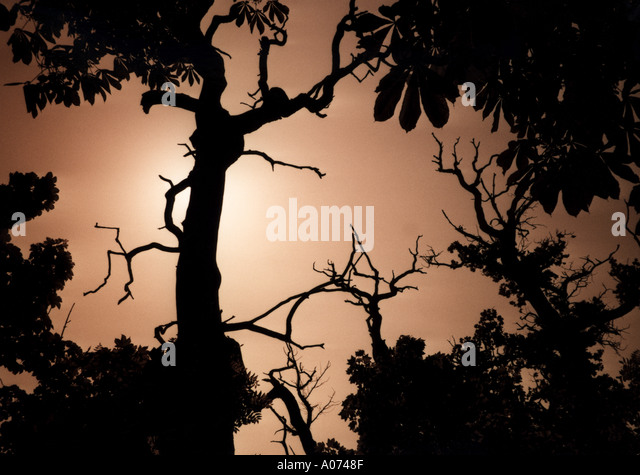 Branch - Stock Image