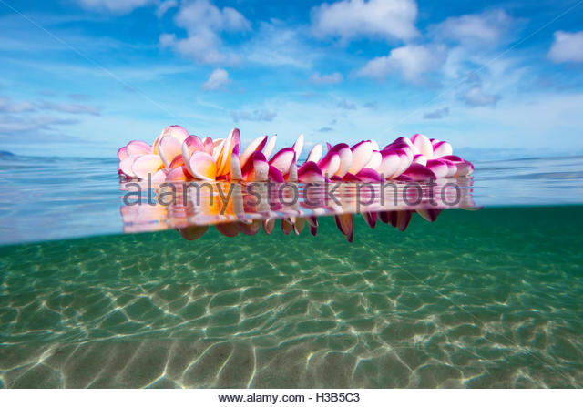 beautiful flower lei floatting in a pristine lagoon - Stock Image