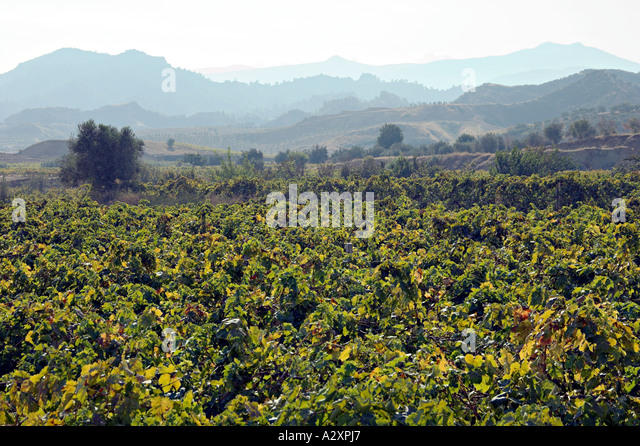 The landscape of Turkey near Alasehir is dotted with lucious vineyards. - Stock Image