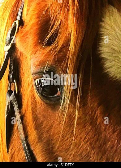 Beautiful horse - Stock-Bilder