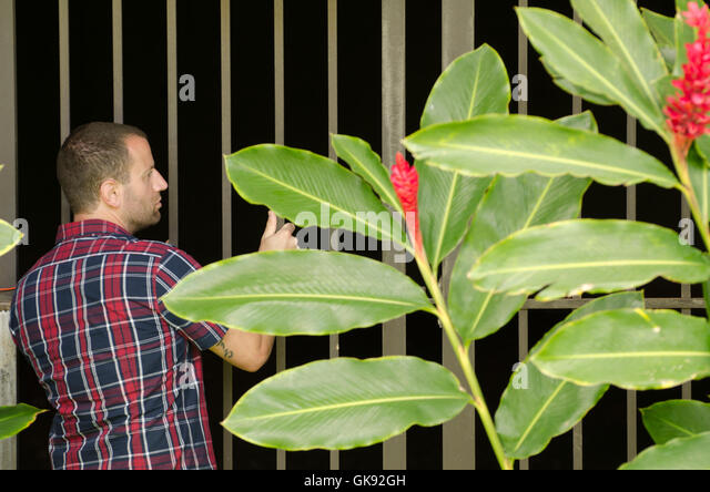 Man peering into a gated area. - Stock Image