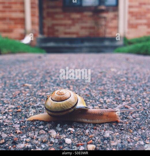 Snail on the Sidewalk - Stock Image