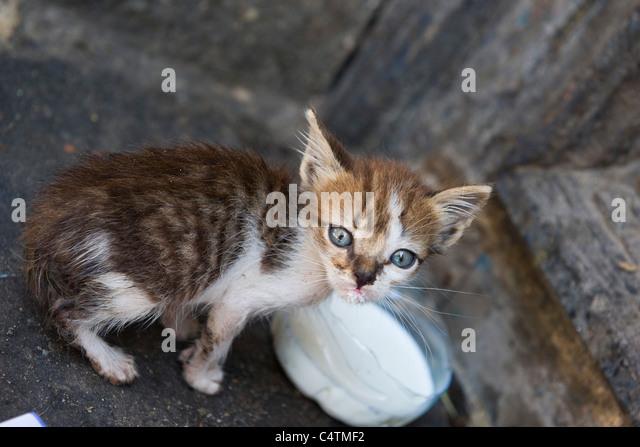 Kitten with bowl of milk - Stock Image