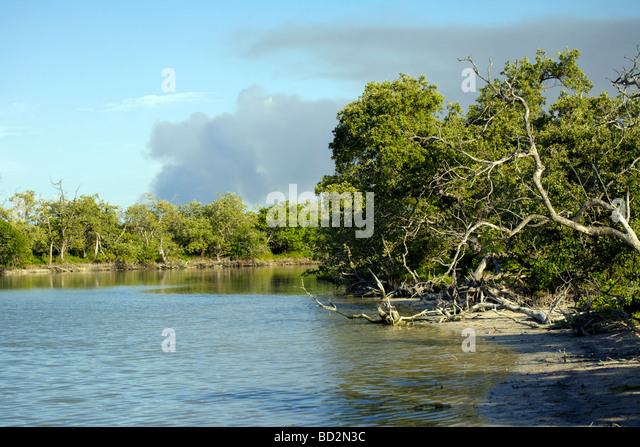 Mangrove swamp on Holbox Island, Quintana Roo, Yucatán Peninsula, Mexico, a unique Mexican destination in the - Stock Image
