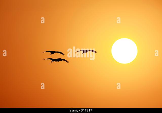 Sunset time - Stock-Bilder