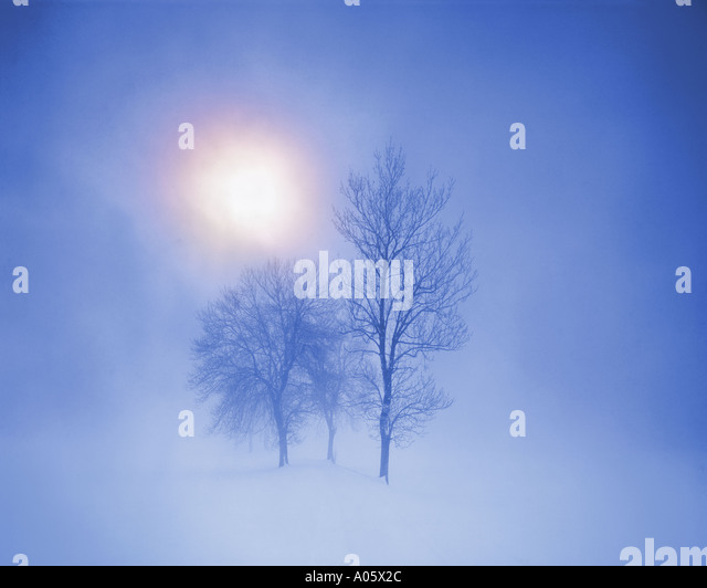 DE - BAVARIA: Winterscene with three trees in early morning mist - Stock Image