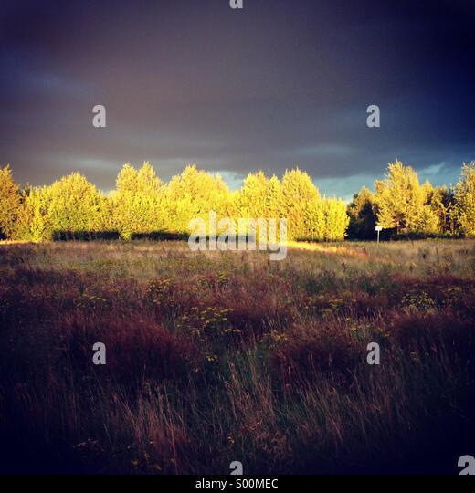 Sunlight over field - Stock Image
