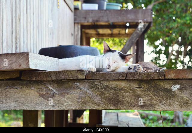 Sleeping cat on the stilt house - Stock Image