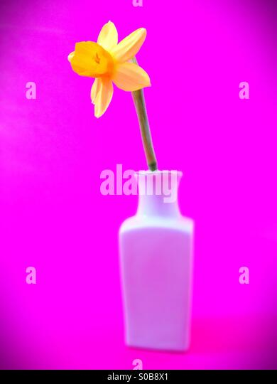 A single yellow daffodil in a vase. - Stock Image