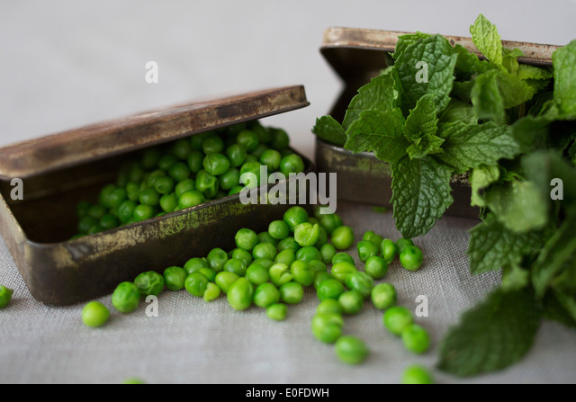 Mint & Pea Ingredients in Tins - Stock Image