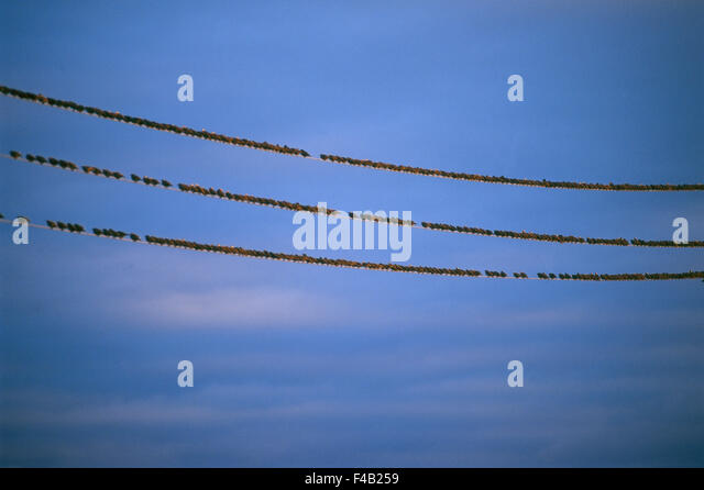 bird catalogue 2 color image communication conceptual horizontal running sky Swedish catalogue 3 telephone line - Stock-Bilder
