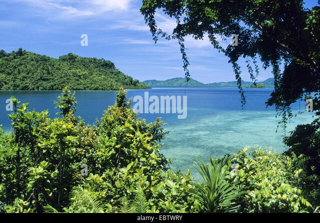 tropical rainforest on Yapen Island, Indonesia, Western New Guinea, Irian Jaya, Yapen Island - Stock Image