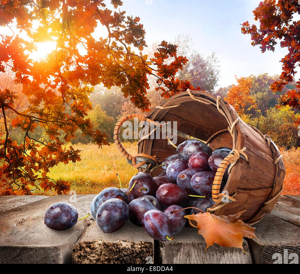 Plums in a basket on wooden table and autumn landscape - Stock Image