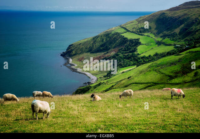 View from Torr Head with sheep grazing. Antrim Coast, Northern Ireland - Stock-Bilder