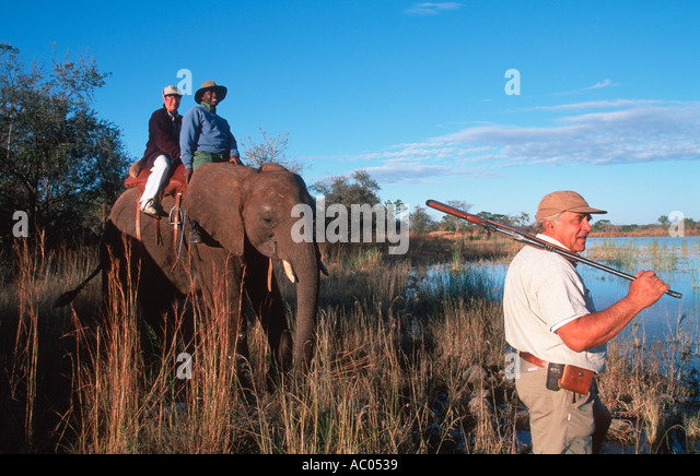 African elephant Loxodonta africana The ultimate safari experience Wild Horizons Elephant Camp Zimbabwe - Stock Image