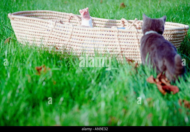 Cat with straw baby carrier on grass - Stock Image