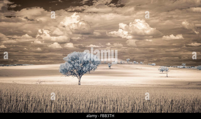 Sunlit field imaged in infrared, outback New South Wales, Australia - Stock Image