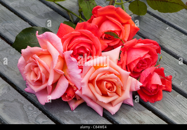 RED AND PINK CUT ROSES ON WOODEN SLATTED GARDEN TABLE - Stock Image