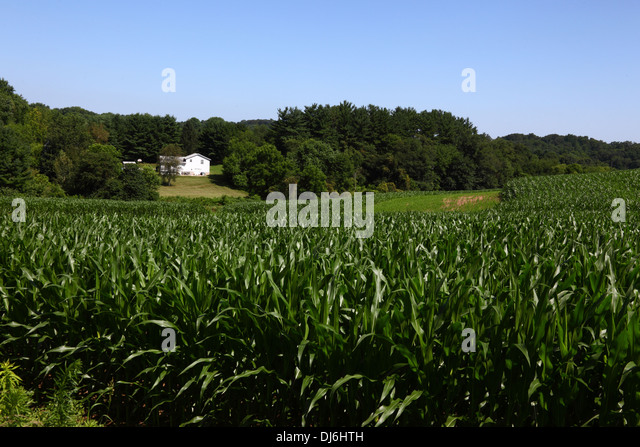 the attachment of americans to corn Complete patent searching database and patent data analytics services.