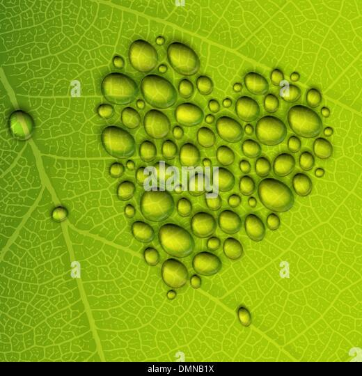 Heart shape dew drops on green leaf. Vector illustration, EPS10 - Stock Image