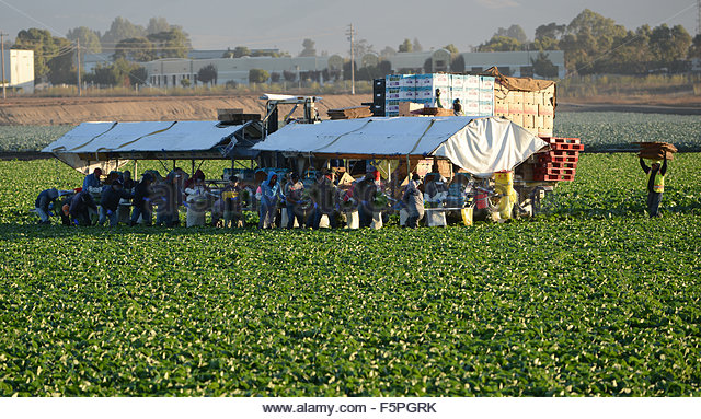 united farm workers and mexican americans The us  employment  mexican workers in the united  of mexican farm workers have  away from americans, while others say that the mexican workers.