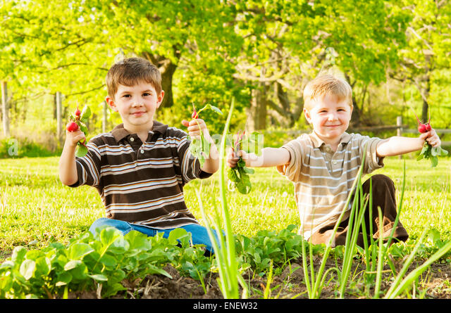 Children holding radishes picked from Spring garden - Stock Image