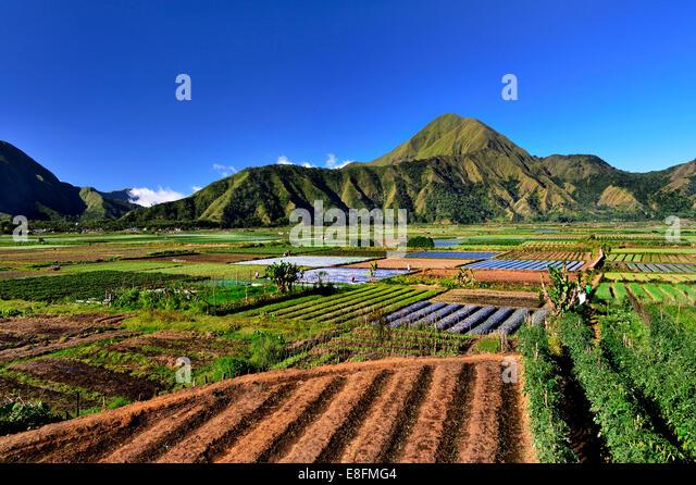 Indonesia, Lombok island, View of Sembalun farm - Stock Image