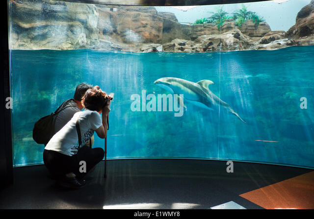 Couple snapping a picture of a dolphin at Osaka Aquarium Kaiyukan, Osaka, Japan - Stock Image