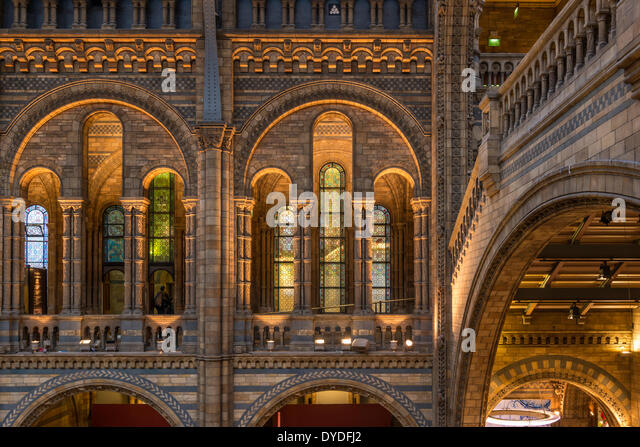 Interior of Natural History Museum in London. - Stock Image
