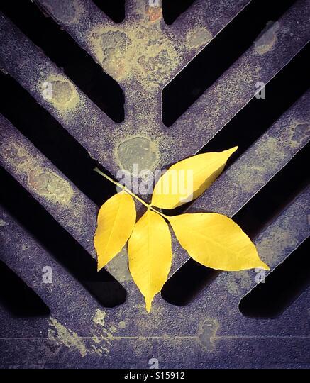 yellow fall leaf on rusty city street drainage sewer - Stock-Bilder