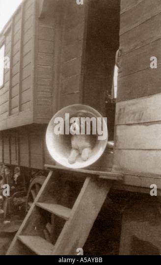 Small dog sitting in old gramophone - Stock-Bilder