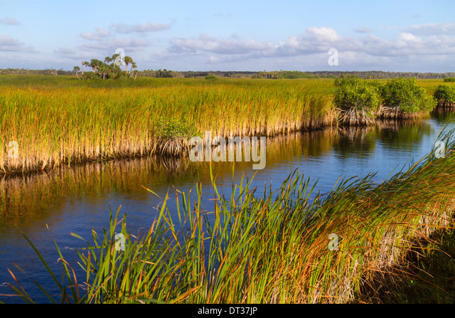 Everglades Florida Big Cypress National Preserve Tamiami Trail US 41 sawgrass palm tree hammock mangrove - Stock Image