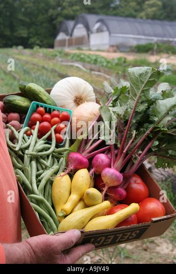Alabama Mt. Laurel Grow Alabama organic farming vegetables - Stock Image