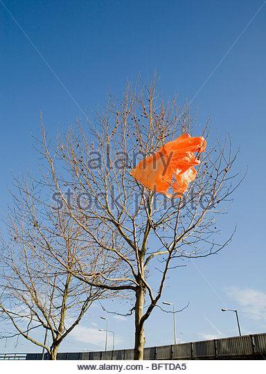 Orange carrier bag in tree - Stock Image
