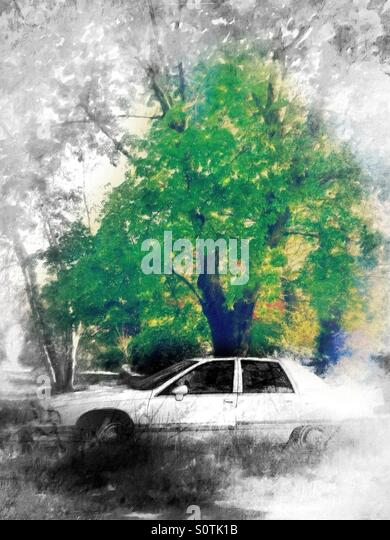 White Car Under a Green Tree - Stock Image