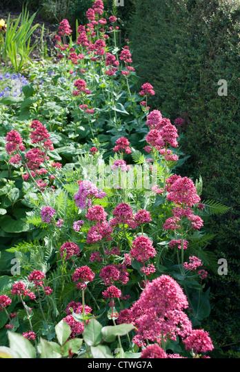 Row Flower Garden : Garden border flowers row stock photos