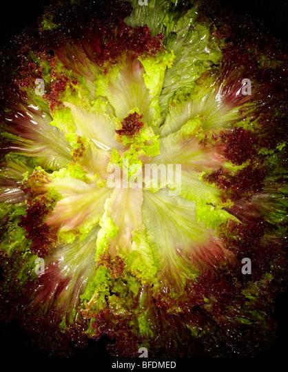 Lettuce - Stock-Bilder