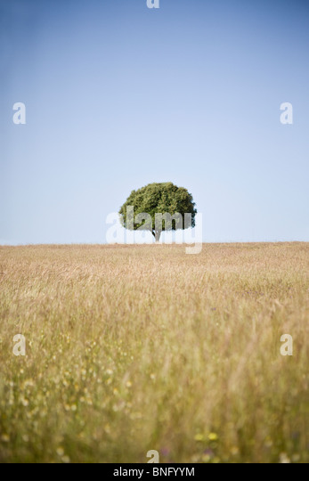 A field with a lone tree on the horizon - Stock Image