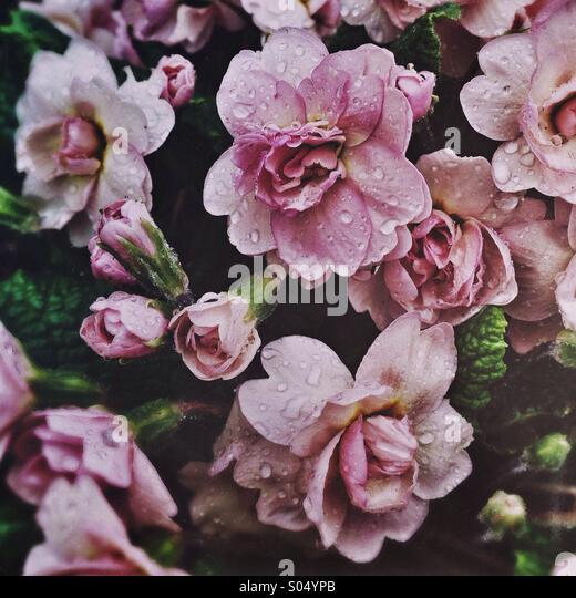 Vintage Roses - Stock-Bilder