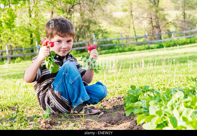 boy holding radishes pulled from garden - Stock Image